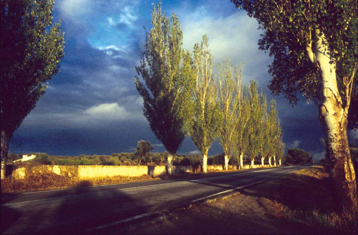 silent-trees_2LR