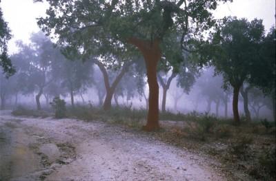 silent-trees_3LR